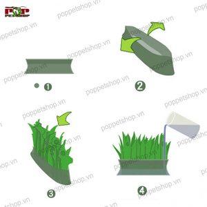 cỏ tạo ẩm bò sát