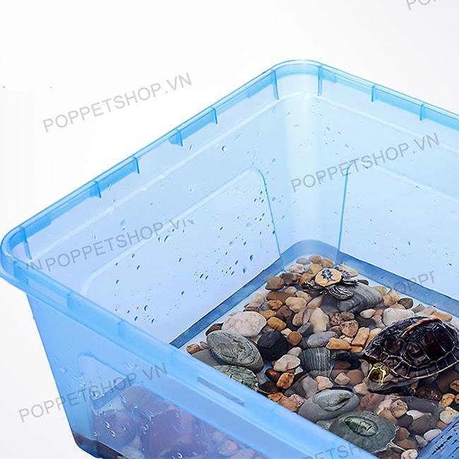 hộp nhựa rùa nước