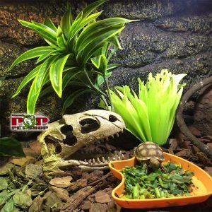 hang sọ khủng long bò sát