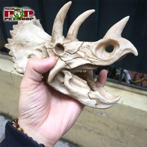 sọ khủng long 3 sừng
