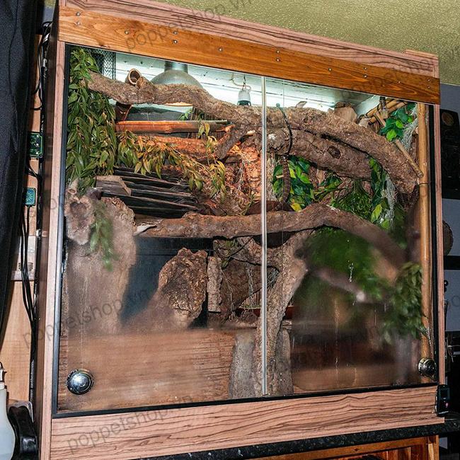chuồng bò sát monitor lizard